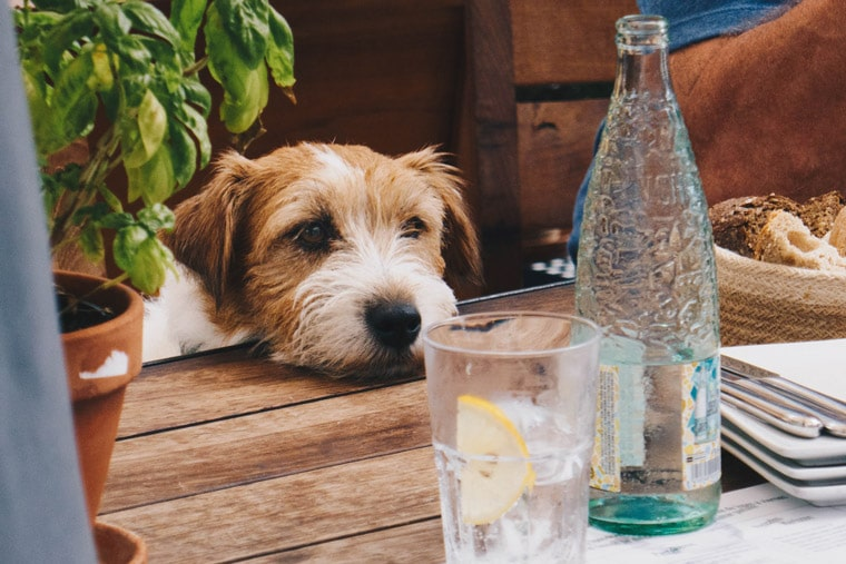 Avoid Table Scraps in Your Dog's Diet