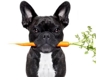 Benefits of Fiber in Your Dog's Diet