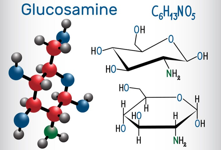 Glucosamine in a Dogs Diet