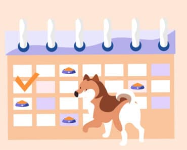 Importance of a Feeding Schedule in Your Dog's Diet