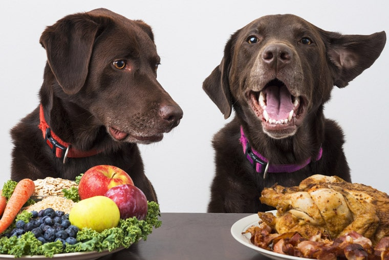 The Proper Way to Switch Your Dog's Diet