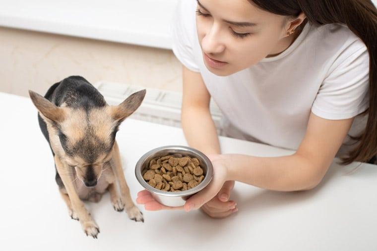 Tips to Consider When Determining Your Puppy Dog's Diet